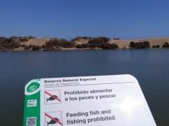 maspalomas gran canaria duinen strandvakantie spanje 7