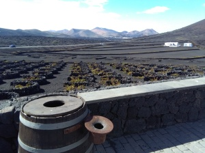 Wijngaard lanzarote druiven lava