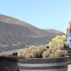 wijnvelden lanzarote vulkanisch
