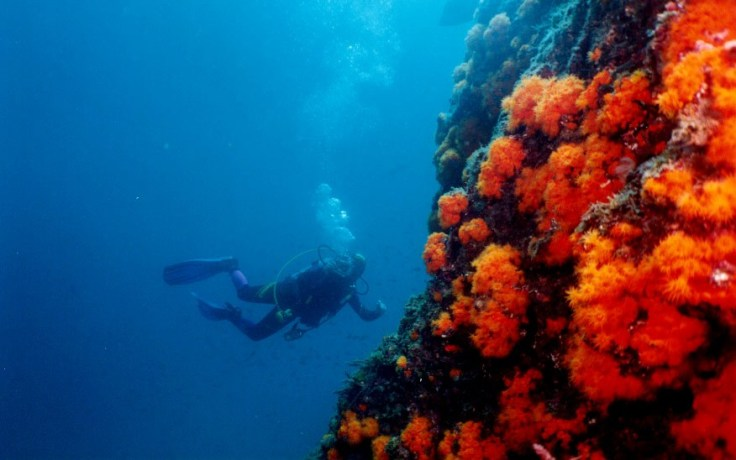 spanje duiken en snorkelen op je vakantie 6