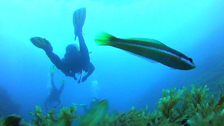 duiken en snorkelen aan de Costa Del Azahar, vakantie spanje
