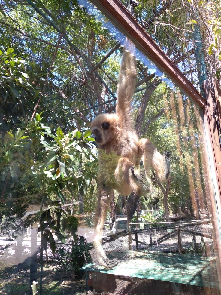 dierentuin-in-estepona-een-van-de-leuke-uitjes-voor-kinderen-vakantie-costa-de-sol-234234-1