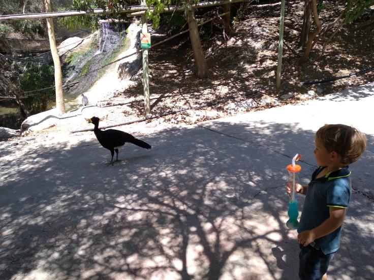 dierentuin-in-estepona-een-van-de-leuke-uitjes-voor-kinderen-vakantie-costa-de-sol-34-1