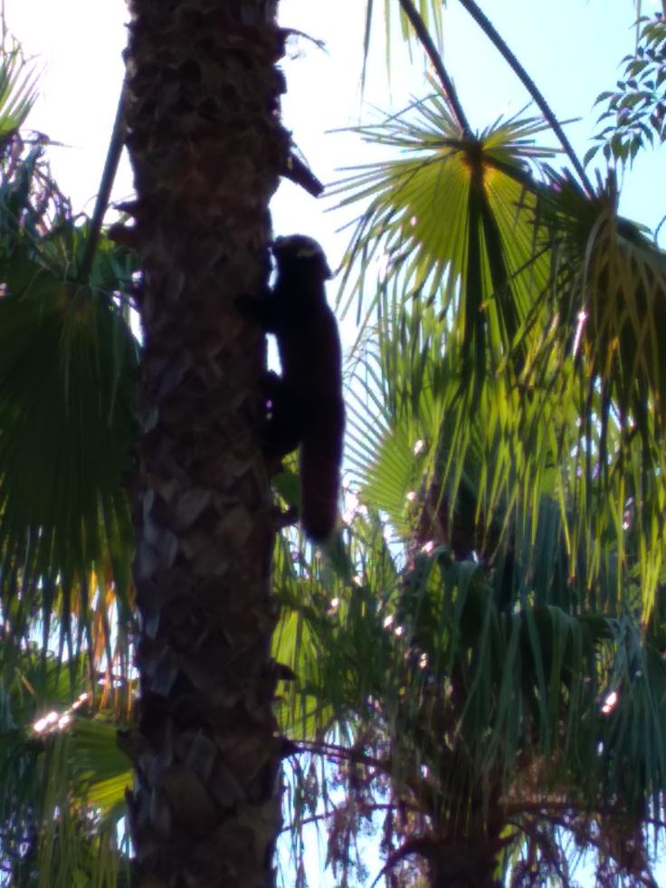 dierentuin-in-estepona-een-van-de-leuke-uitjes-voor-kinderen-vakantie-costa-de-sol-44-1