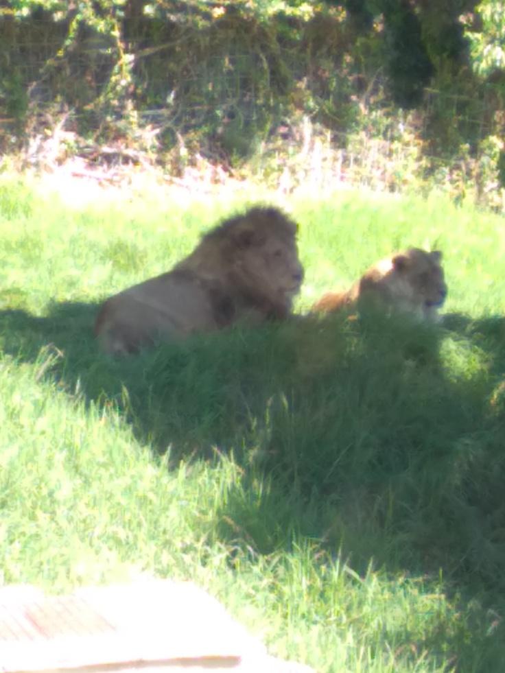 dierentuin-in-estepona-een-van-de-leuke-uitjes-voor-kinderen-vakantie-costa-de-sol-534-1