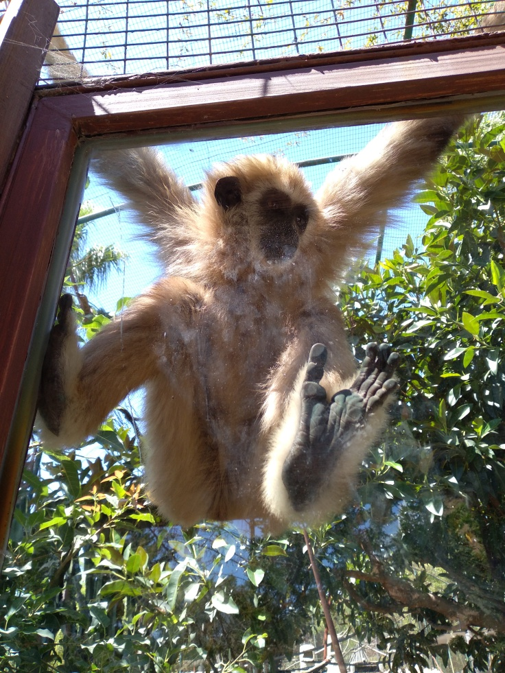 dierentuin-in-estepona-een-van-de-leuke-uitjes-voor-kinderen-vakantie-costa-de-sol-546456-1