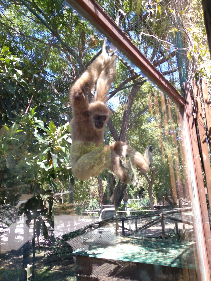dierentuin-in-estepona-een-van-de-leuke-uitjes-voor-kinderen-vakantie-costa-de-sol-678-1